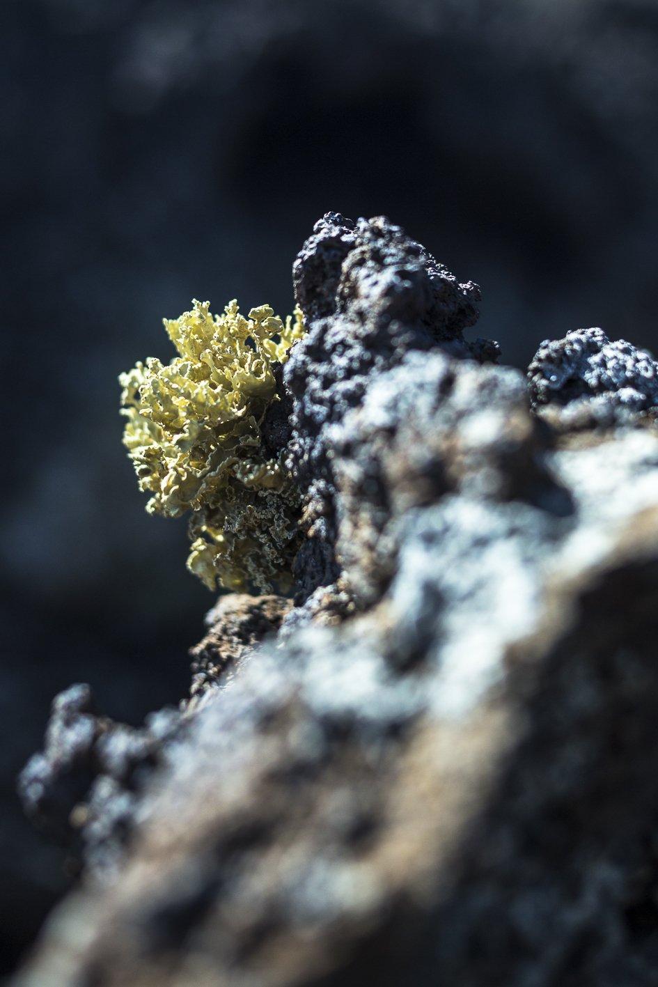 licheni tra la roccia lavica