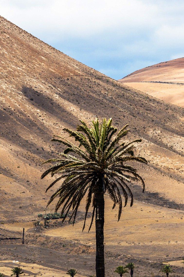 Palma tra i vulcani a Uga